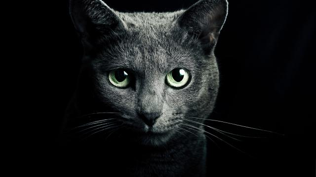gatti neri superstizione
