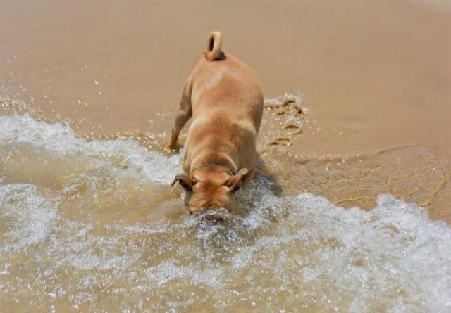 Foto L'acqua di mare fa male ai cani?