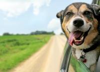 Foto Farmaci per il vomito nel Cane