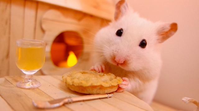 Foto Cosa mangiano i criceti?