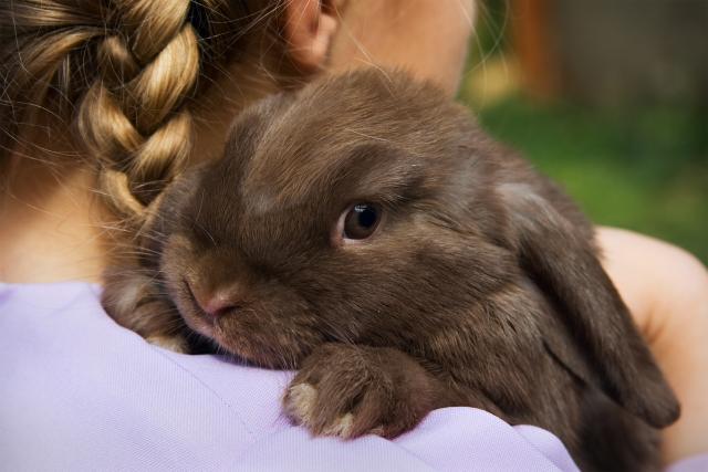 Foto Quanti anni vivono i conigli?