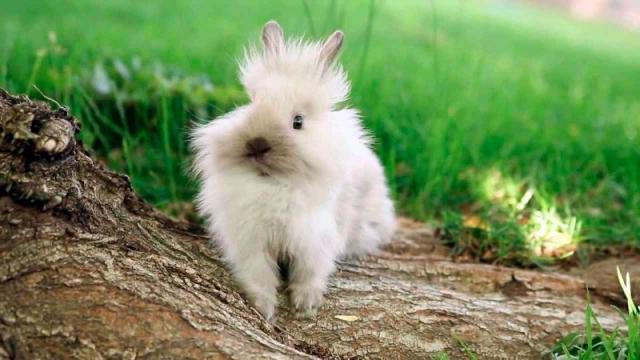cause morte coniglio