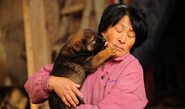 Foto Donna percorre 2550 km per salvare i cani da morte certa