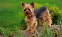 Foto Cani di piccola taglia