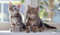 gattini maschio e femmina