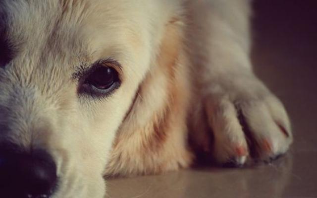Foto Come si calcola l'età di un cane?
