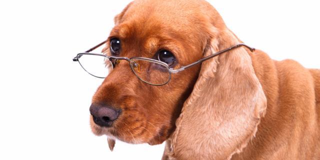 cane anziano anni