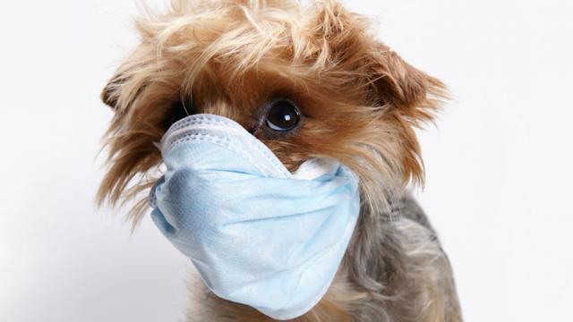 Foto Cane malato: i sintomi più comuni