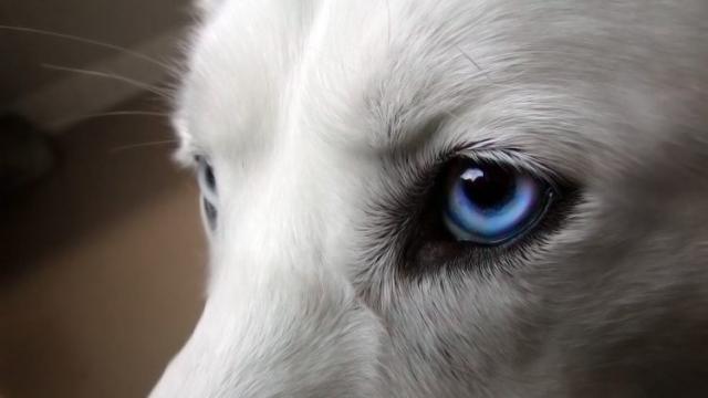 tumore occhi cane