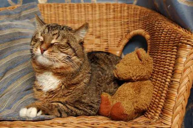 Foto Antidolorifico per gatti: quale posso dare?