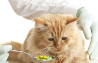 antidolorifico gatto