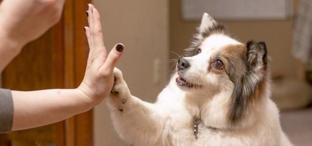 cani psicologia canina