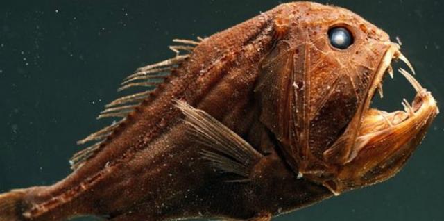 Pesce di Fangooth