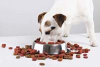 Foto Migliore cibo per un cucciolo: alcuni consigli