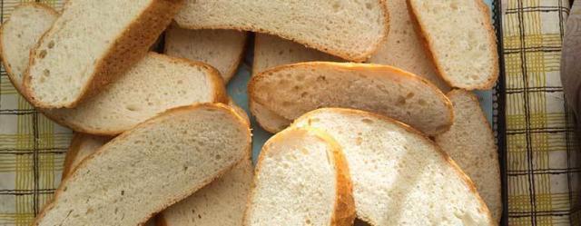 criceto mangia pane
