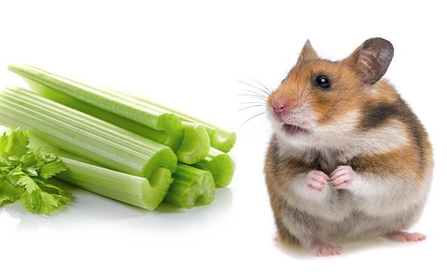 Foto Il criceto può mangiare sedano?