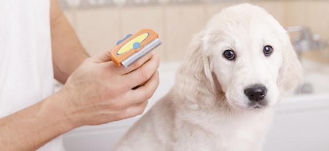 cane perde pelo