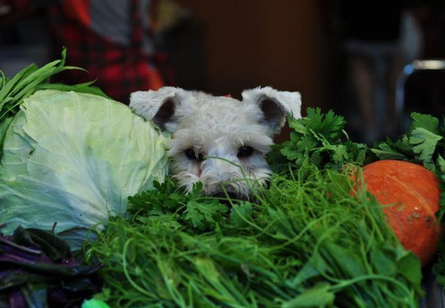 Foto Il Cane può mangiare verdure?