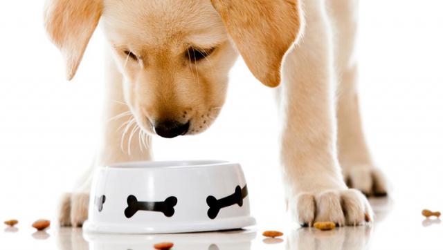 Foto Allergie e intolleranze alimentari nel Cane