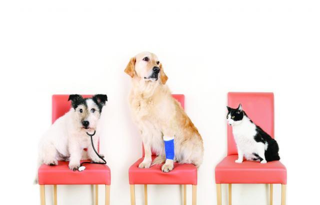 Foto Assicurare il cane: i nostri consigli