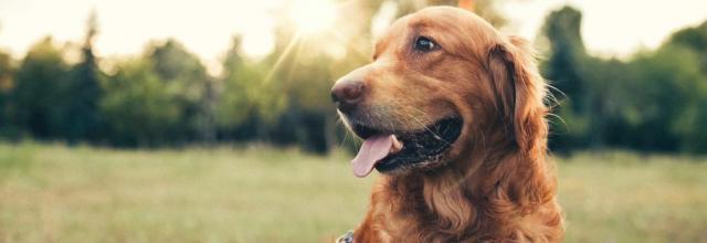 assicurazione per animali