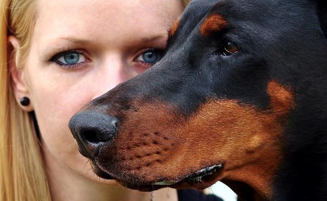Foto Come vedono i cani?