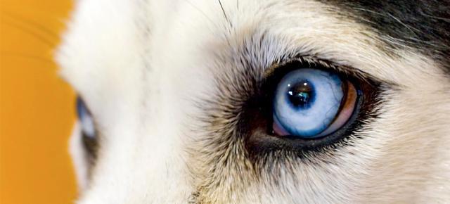 cosa vede un cane