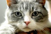 Foto Tigna nel Gatto: cosa fare?