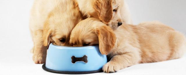 alimentazione cucciolo