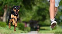 Foto Paura dei cani. Cos'è la cinofobia?