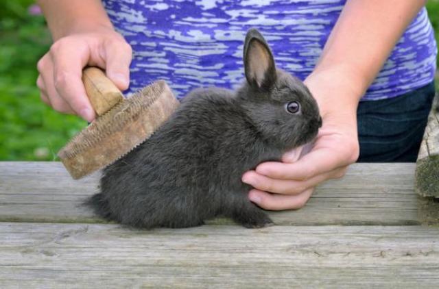 spazzolare coniglio