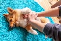 massaggio cardiaco cane infarto