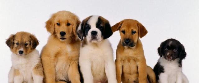 cani per bambini