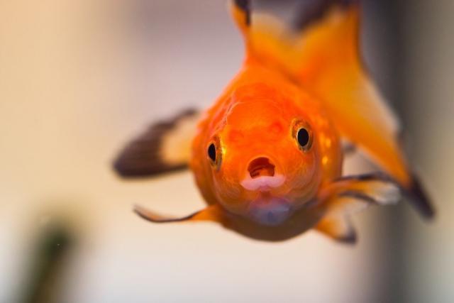 pesci per bambini