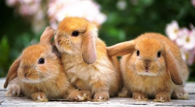 conigli per bambini