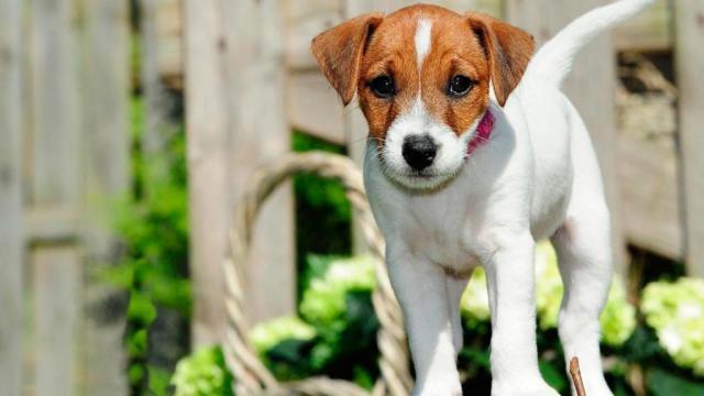 cane cuccioli