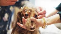 Foto Agopuntura per cani: alcuni consigli