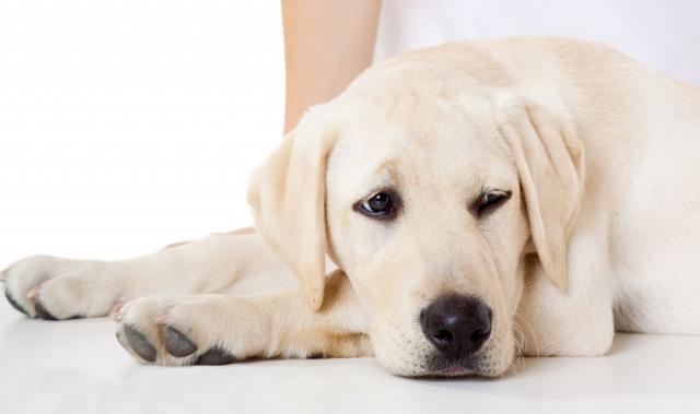 Foto Rimedi naturali per un Cane sano