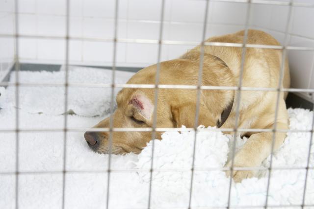 Foto Cane malato, picchiato e seppellito vivo