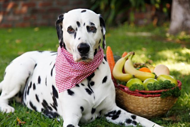 Foto 10 frutti e verdure da dare ai Cani