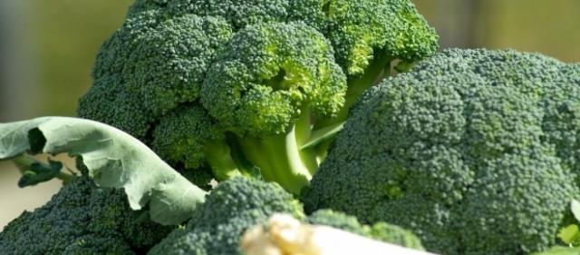 broccoli al cane