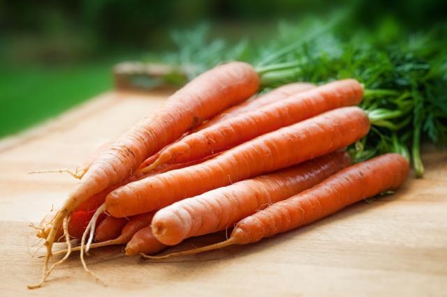 carote al cane
