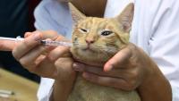 farmaci antibiotici per gatti