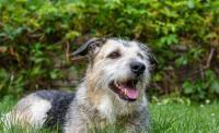 Foto Tumore milza cane: cause, sintomi e trattamento