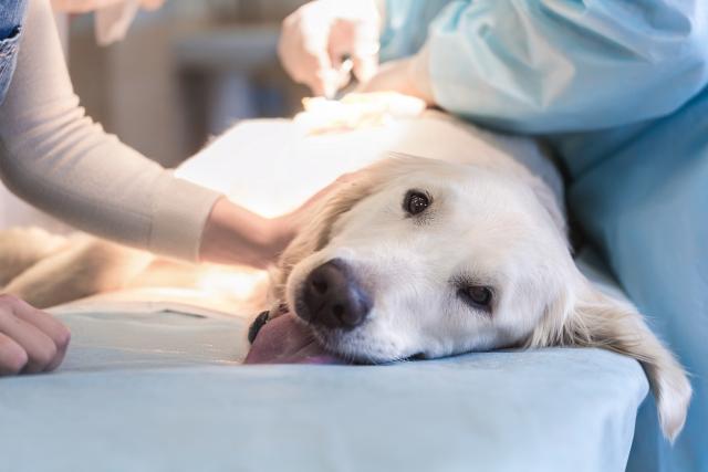 Foto Tetano nel cane: sintomi e cure