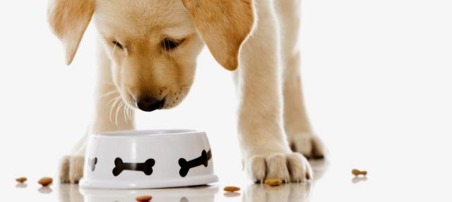 appetito cane