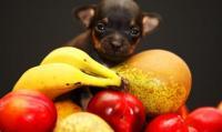 Quale frutta può mangiare il Cane? 14 frutti per Cani