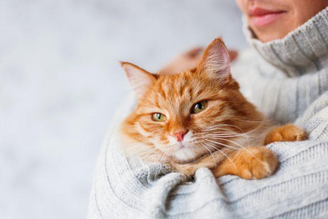 Foto Paure, fobie e ansie nel gatto: cause e trattamento
