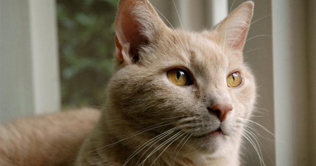 Foto Intestino irritabile Gatto: cause, sintomi e trattamento