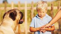 Foto Come superare la paura per i cani